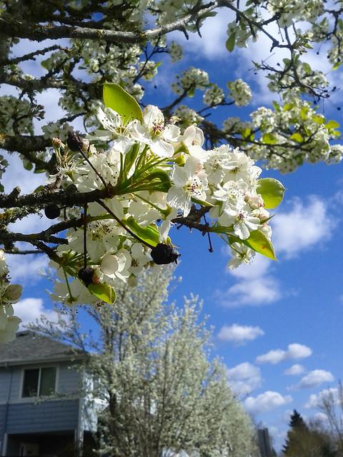 Spring in Corvallis.jpg