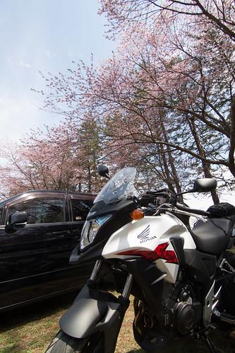 桜と400X