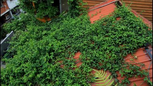 爬滿建築的綠意
