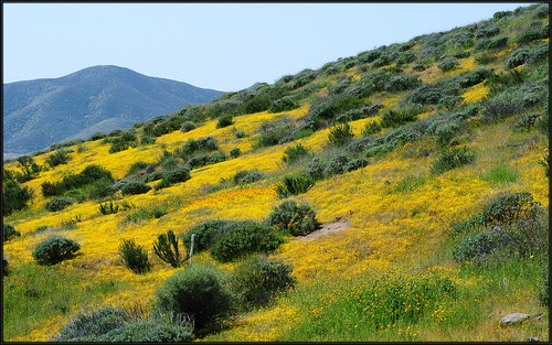 california lake diamond southern valley poppies hemet wildflowers