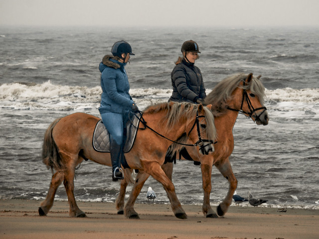 Horseback riding on the beach near Castricum
