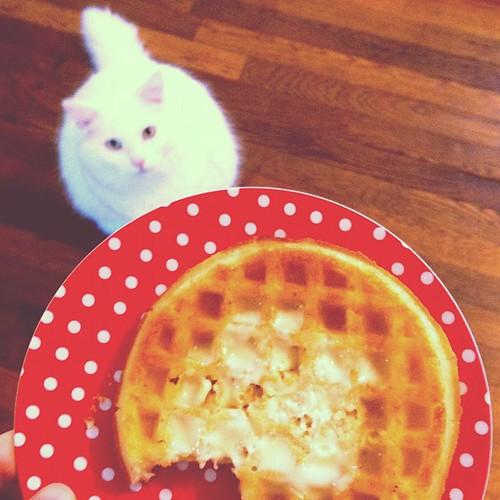 Kitty waffle.