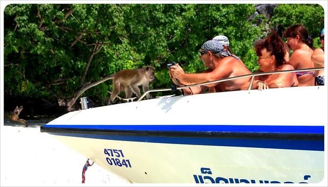 monkey beach essay