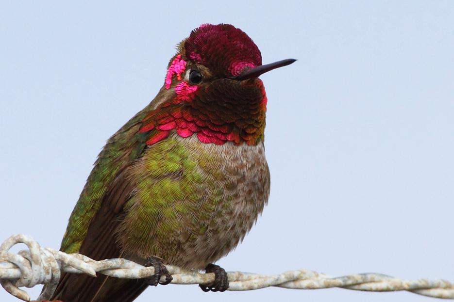 022812_05_hummingbird