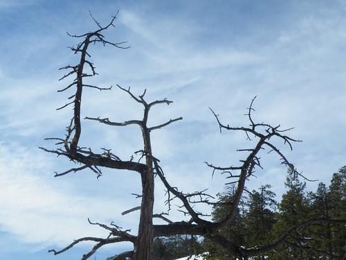 Signaling tree
