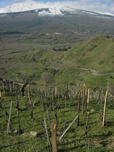 Monte Colla