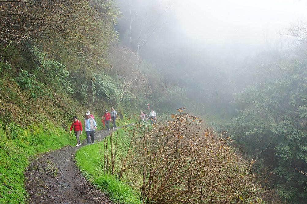 觀霧巨木步道-022