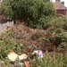 Belfast walk before - So much rubbish