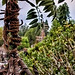 Tarzan's Treehouse And A Kid Named Burt