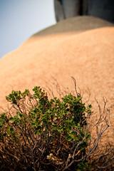 Tiny Bush Large Rock