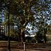 Small photo of Alton Road Reserve