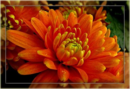 Orange Beauty by Enjoy the journey...Not the Destination~