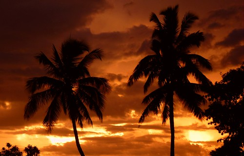 sunset sky orange palms australia palmtrees queensland tropical cairns