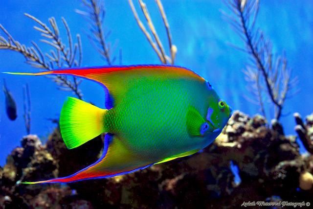 Beautiful Green Fish - Birch Aquarium at Scripps Institute? Flickr ...