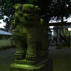 狛犬探訪 鳥居前向かって右。奉納は麻布の市兵衛町講中、とある 本殿前の狛犬は立派だが銘はない