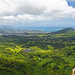 Small photo of Green Oahu