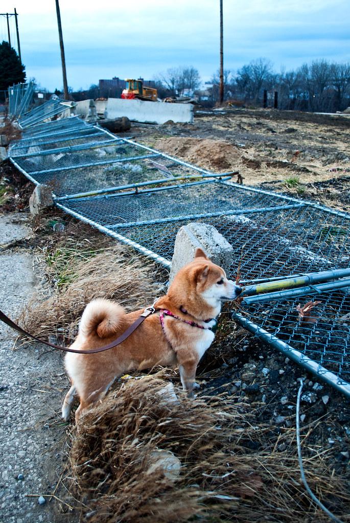 365-230 Akemi Owns Fence