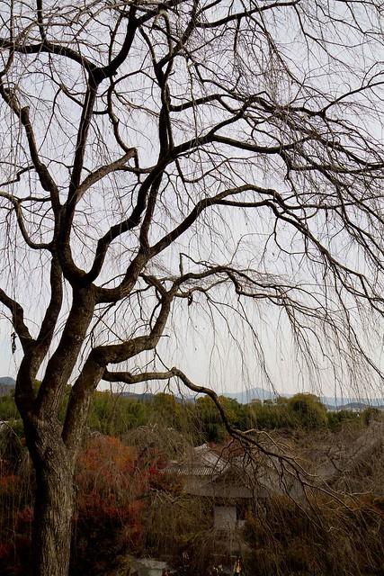 枯れ木も山の賑わい
