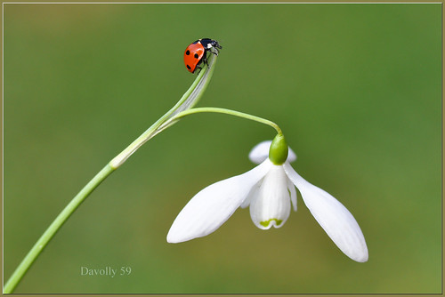 The Acrobatic Ladybird..... Explore 24/2/2012   #169