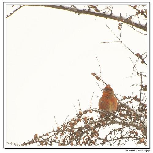 2012-02-25-1-P2259076