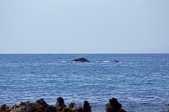 2012-02-10 02-19 Maui, Hawaii 267 Wailea, Ulua Beach