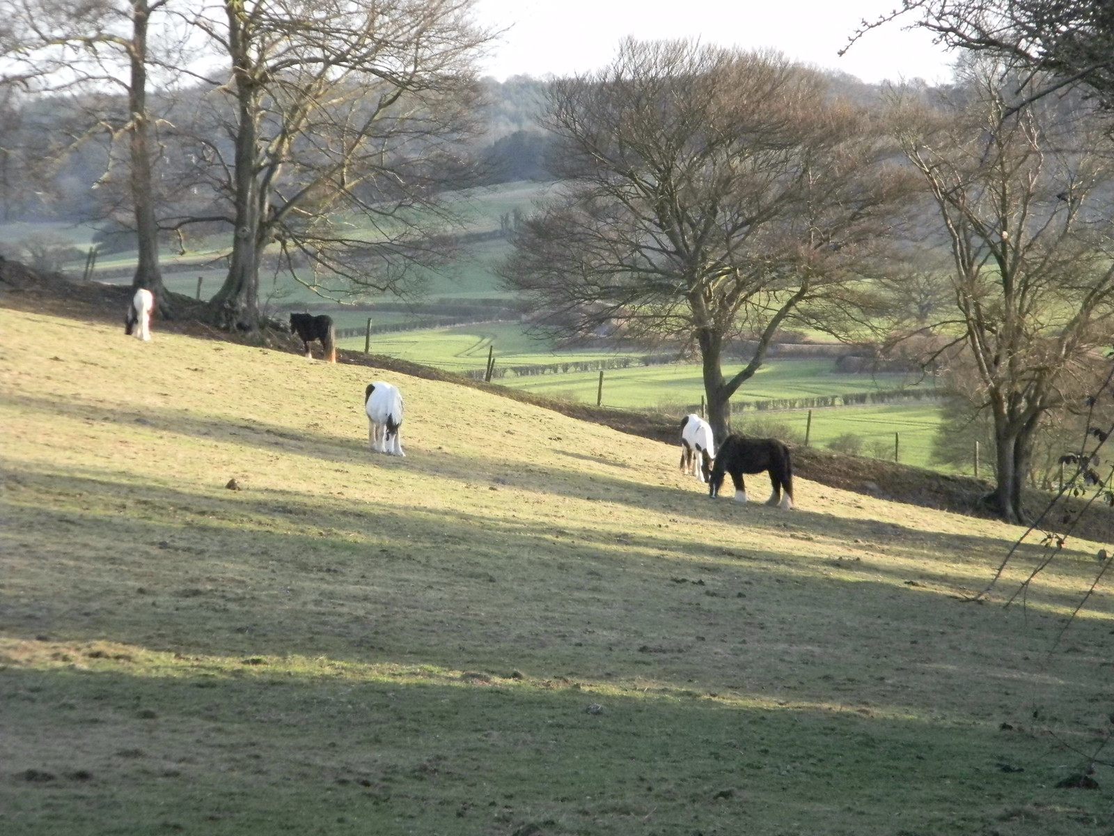Horses on a slope Saunderton Circular via West Wycombe