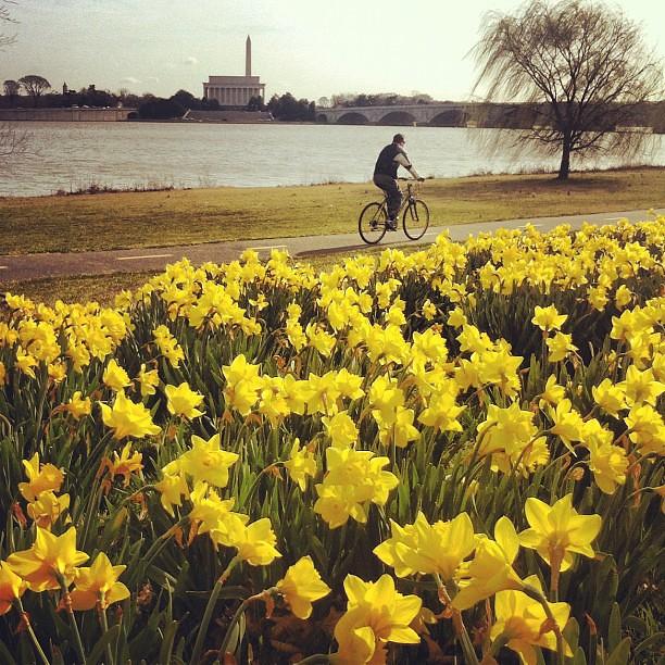 biker along Potomac