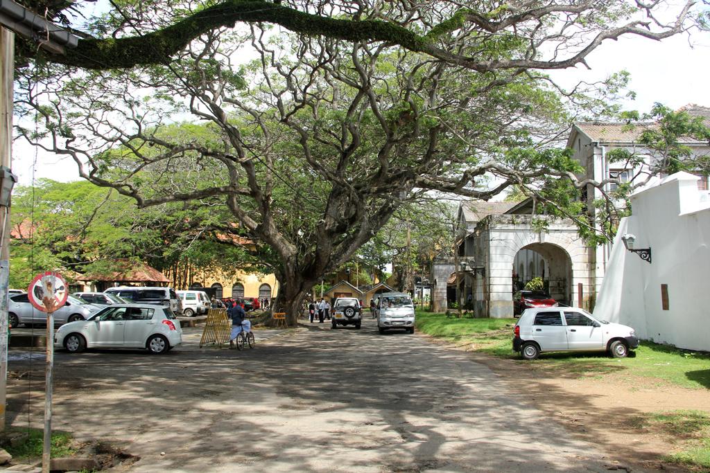 Beautiful Trees in Sri Lanka