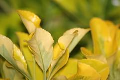 leaf, yellow, sunlight, plant, macro photography, flora, close-up,