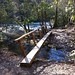 Small photo of Abrams Creek Trail