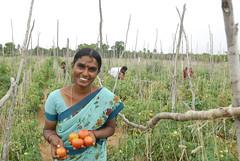 Tholasamma in India
