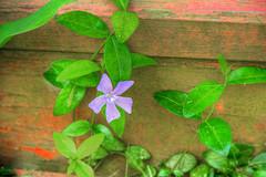 Flower in Mill Race Village
