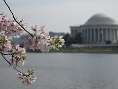 DC - Cherry Blossoms/Monuments