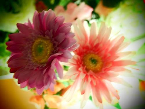 False flowers