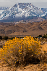 California - The Eastern Sierras near Bishop and Mammoth Lakes