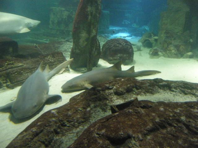 Shark Dive Xxiv Photos From Long Island Aquarium