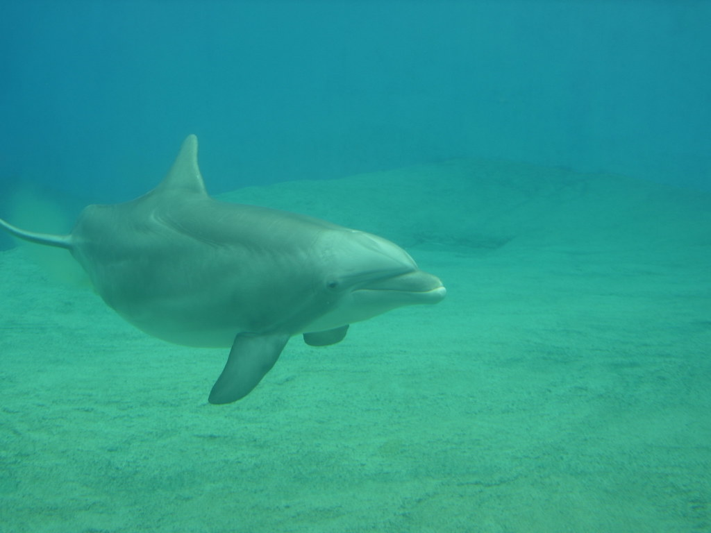 What is a male dolphin called?