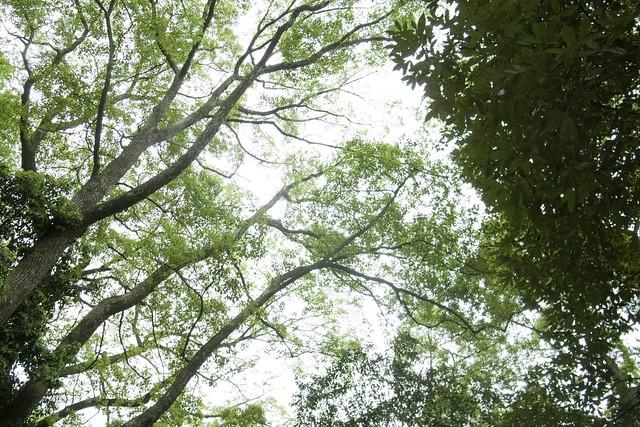 2012-04-30の空