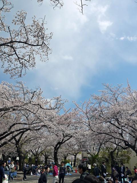 Sakura 2014 幸ヶ谷公園