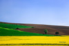 Vibrant Colors of The Field by AnnaYohana