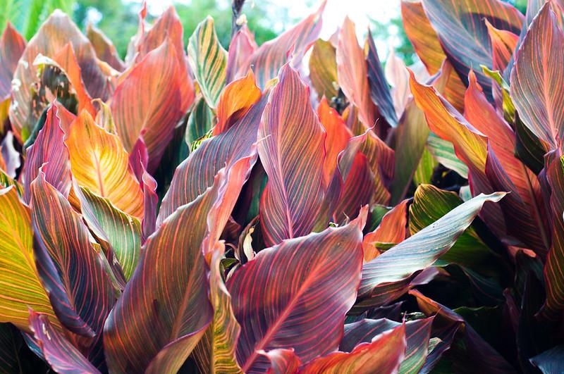 Foliage-11