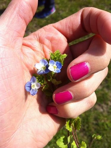 Ängavallen våren 2014