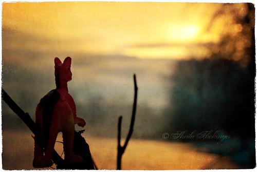 sunset texture dino bokeh goldenhour plasticdinosaur riversedge havingalittlefun nikond200