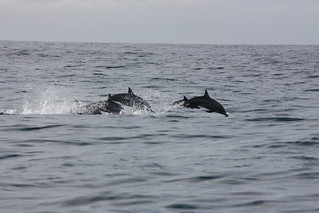 Mirissa, whale watching, dolphins