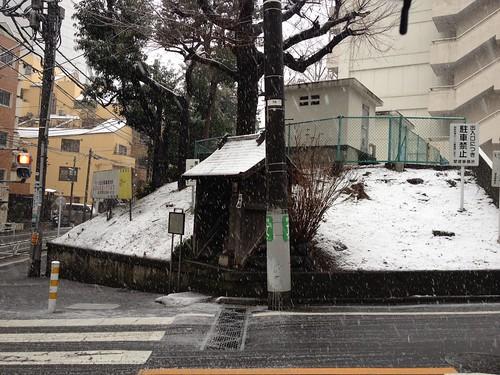 雪、積もりはじめました