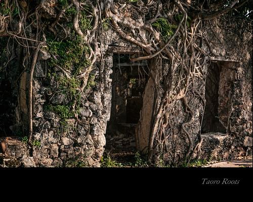 Taoro's roots by Rey Cuba