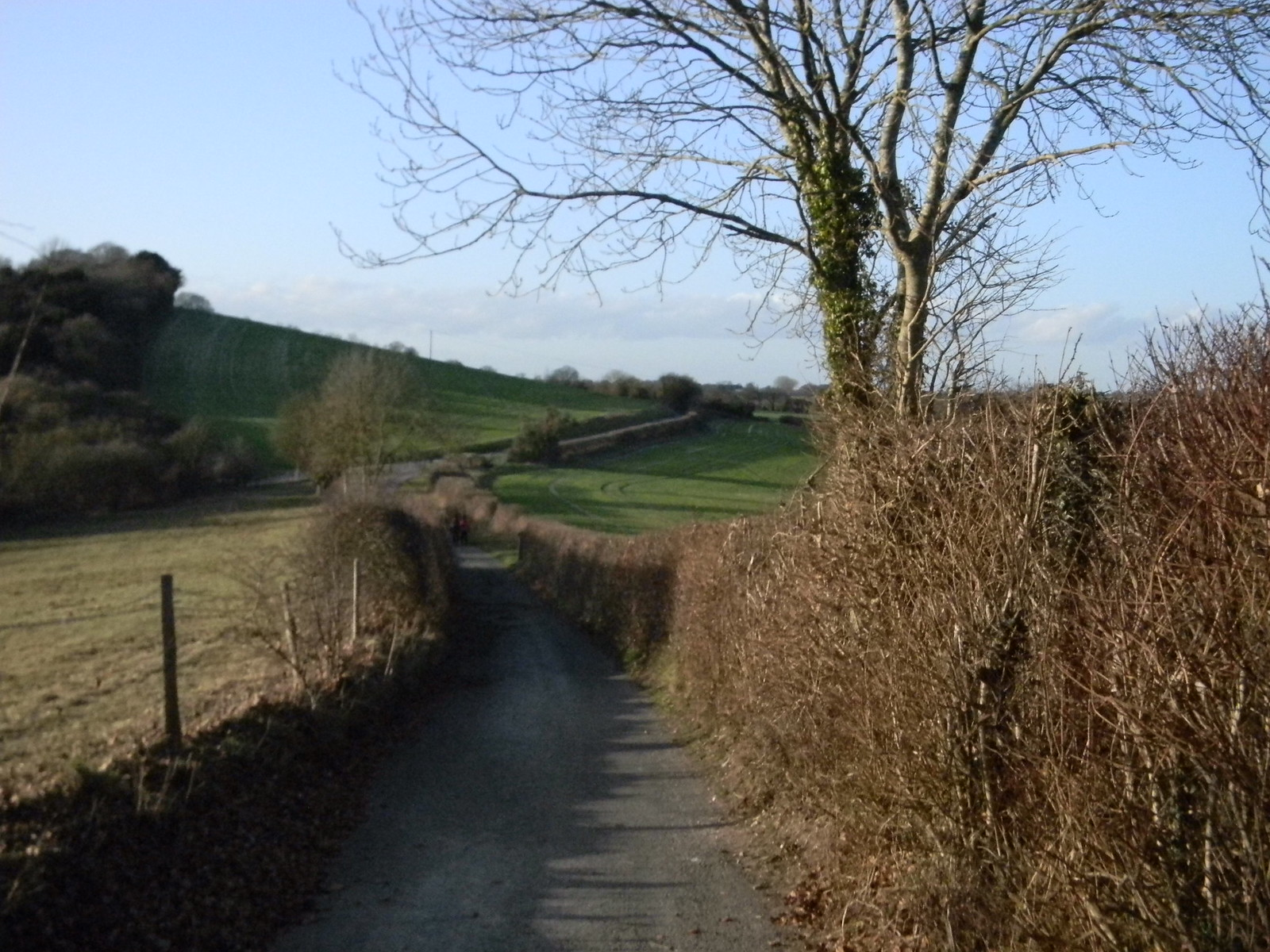 Snaking hedge Saunderton Circular via West Wycombe