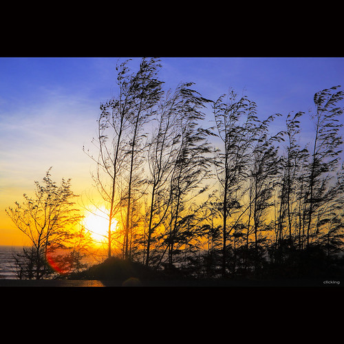 ocean lighting trees light sea sky sun sunlight beach beautiful sunshine silhouette backlight sunrise landscape dawn sunny bluesky vietnam sunnyday beautifulday phanthiết kêgà vietnameselandscape khegà