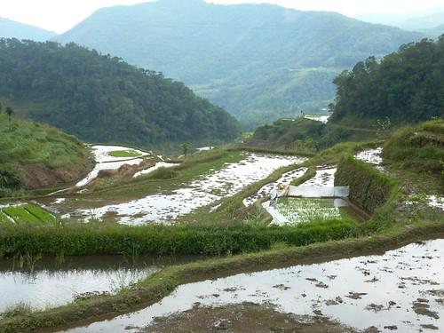 Luzon-Banaue-Batad (9)