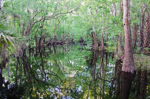usa nature florida corridor conservation agriculture wetland greenway holopaw greeninfrastructure floridawildlifecorridor fwceflickr